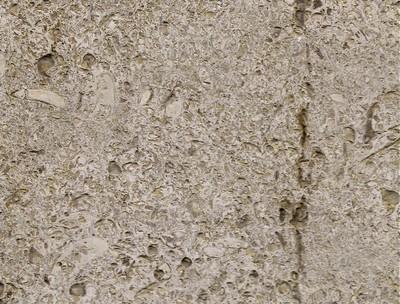 A Verona Fossil Close up (3)