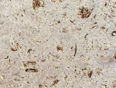 Verona Fossil
